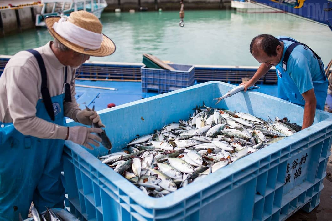 Fish being unloaded from the boat. These were caught by a net in a span of 2 hours.