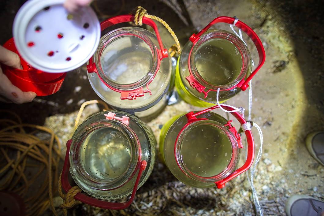 Sea FF in Jars