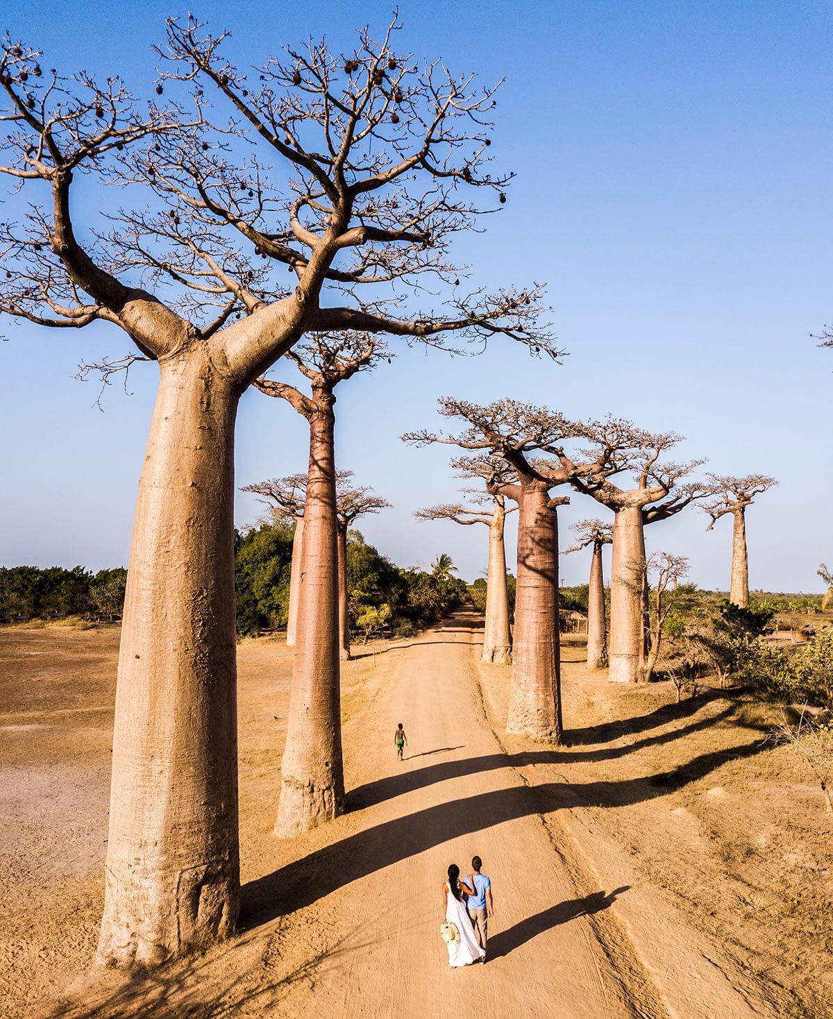 マダガスカル政府観光局