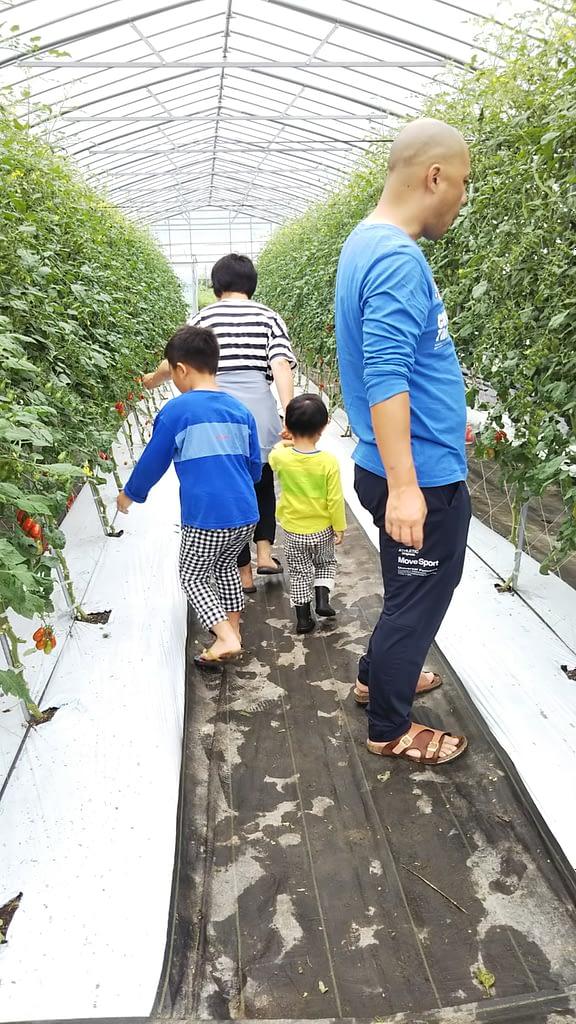 美肌トマト「ロッソナポリタン」の収穫体験