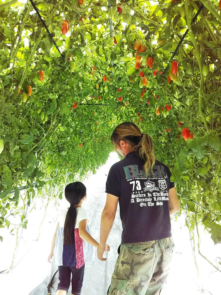 高原野菜の収穫体験 Yamada Farm